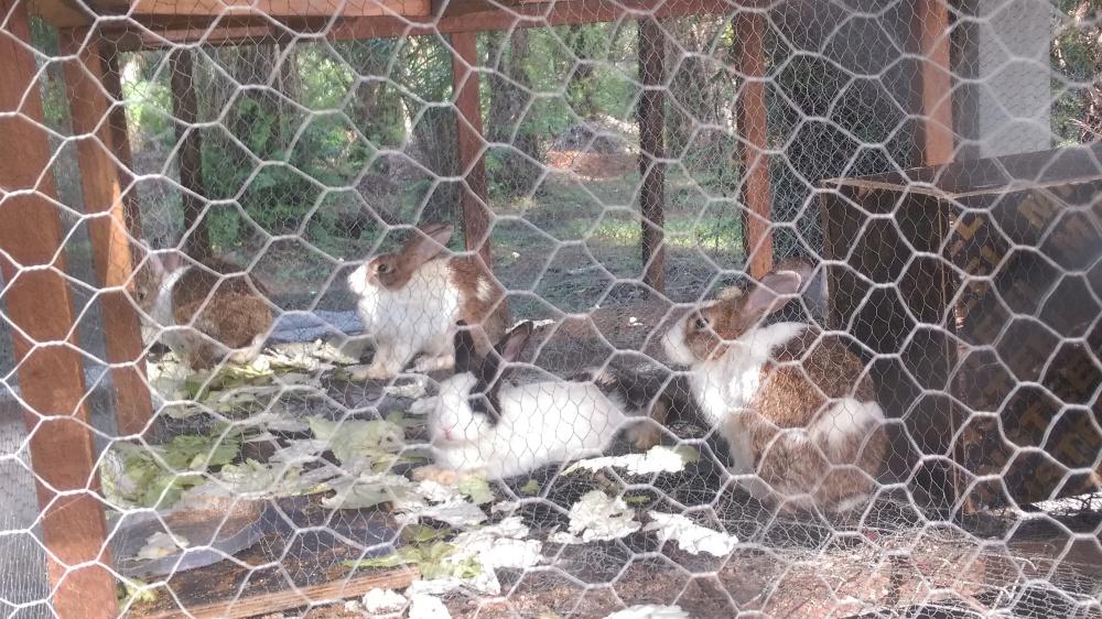 And bunnies!!!!!! Oooohhhhhh bunnieesssssses ❤❤❤❤❤